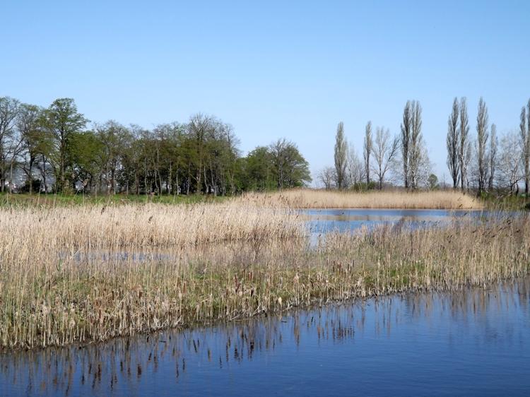 A Csörge-tó partján