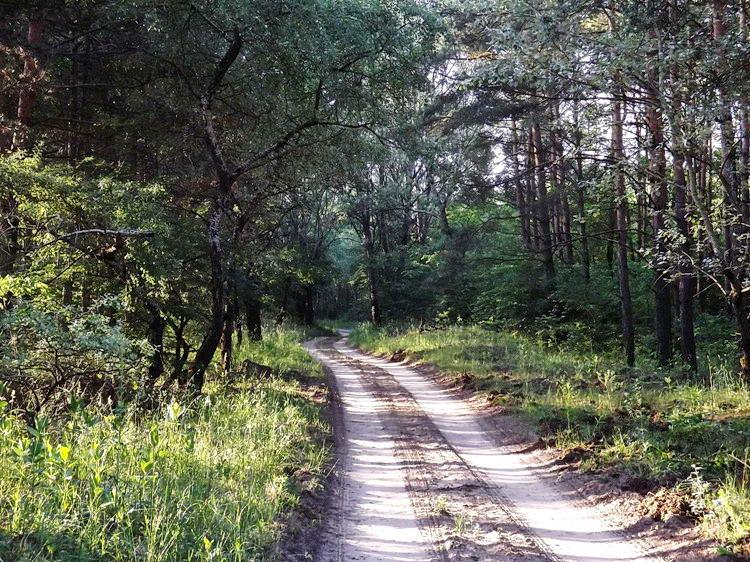 Séta a kora reggeli erdőben