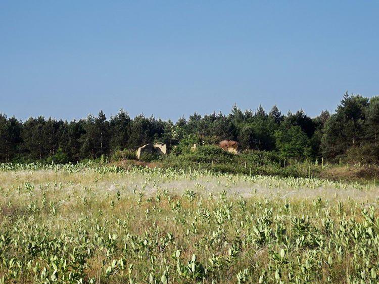 Romos tanya az Illancson. Mindenhol felütötte a fejét a vaddohány.