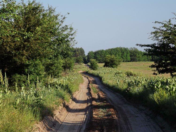 Az Illancson átvágó földúton