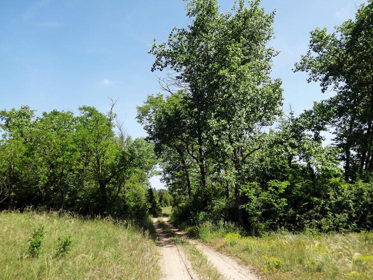 Mezők és erdőfoltok között átvágó földúton