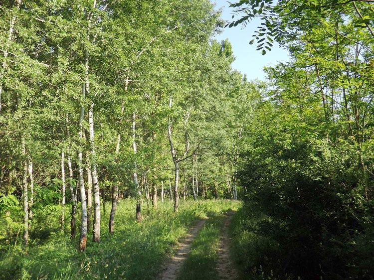 A Kis-Keceli-úton a Tóth-erdőben