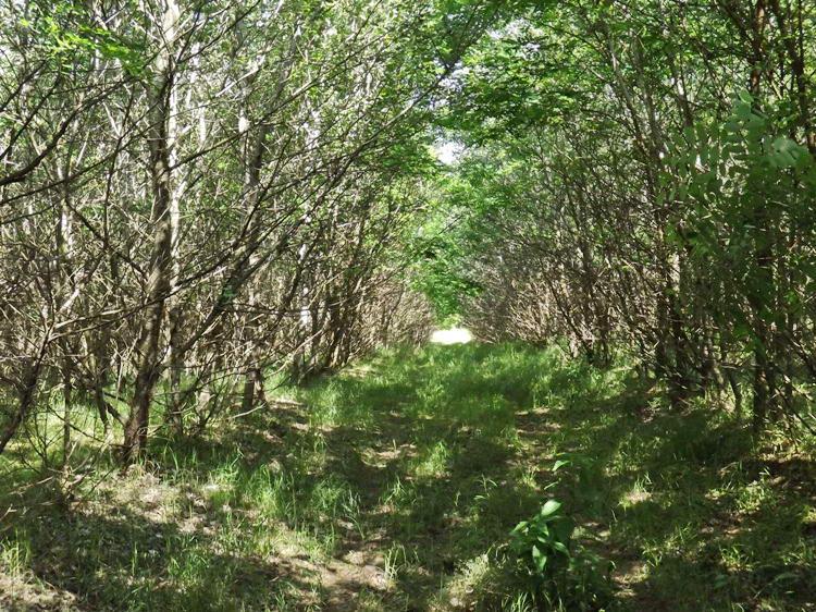 A János-teleki-erdő benőtt nyiladékain 2.