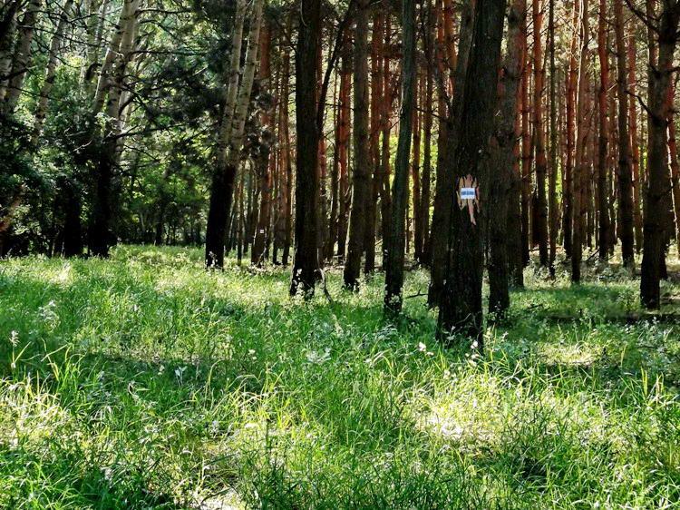 Alig látható nyomokon a János-teleki-erdőben