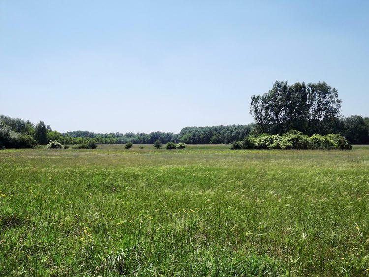 Mezők között a Petróczi iskola felé 2.