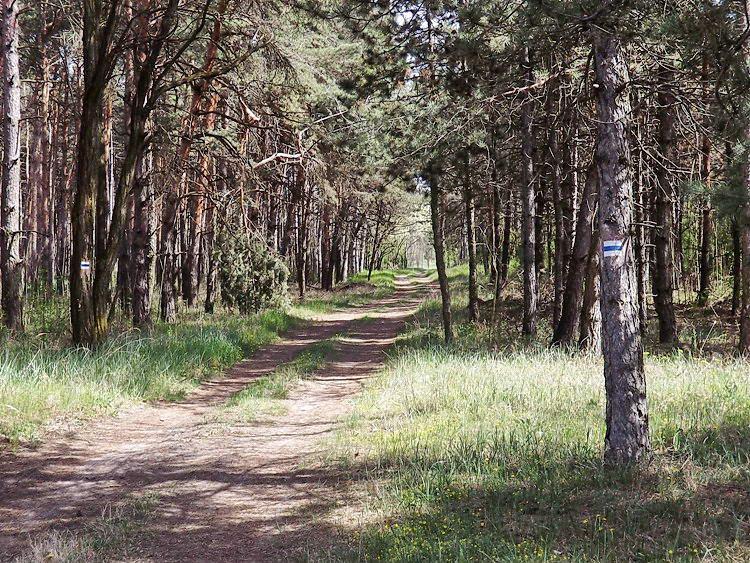 A Felső-Ásotthalmi-erdő nyiladékaiban folytattam az utam