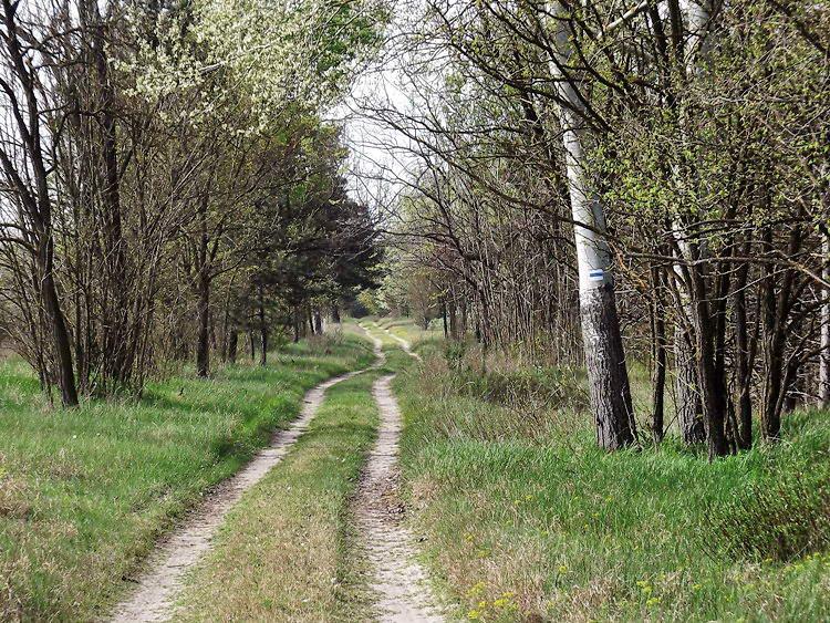Keréknyomokon a Csorvai-erdőben