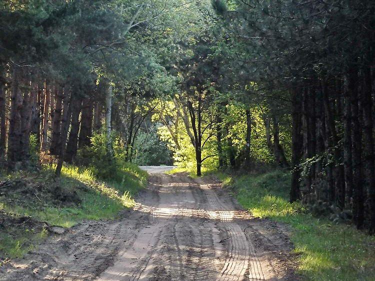 A Kállai-erdő szélén már feltűnt előttem az aszfaltút