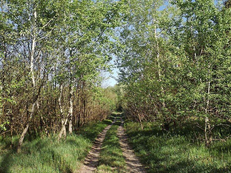 A Pusztaszeri-erdő földútjain 1.