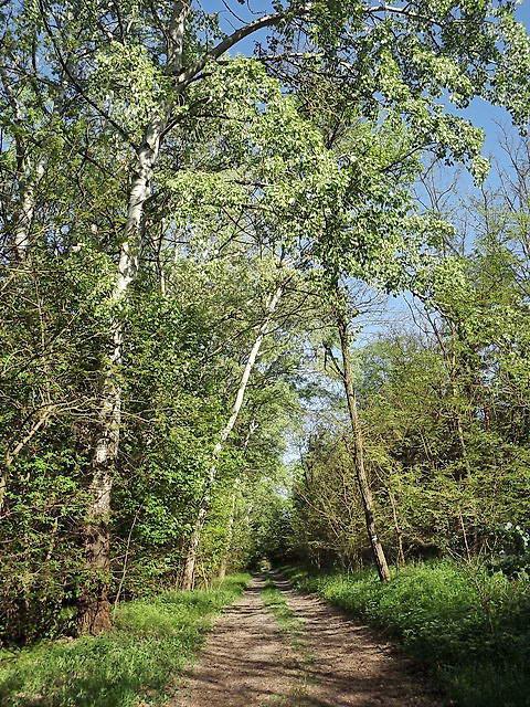 A Pusztaszeri-erdő földútjain 2.