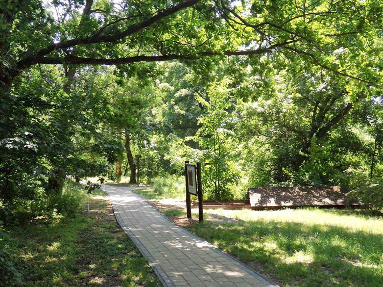 Az Anna-ligeti arborétum sétányán