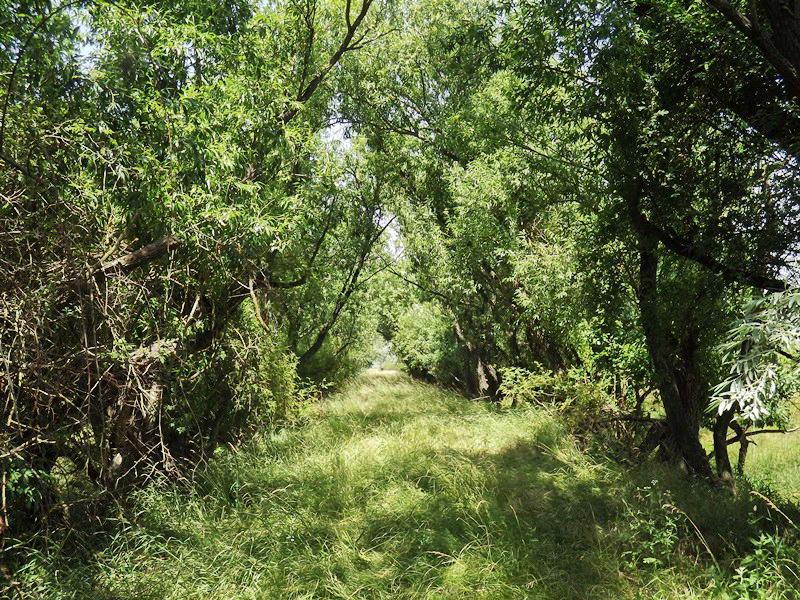 Dzsungelharc a volt vasúti töltésen közvetlenül a letérés előtt