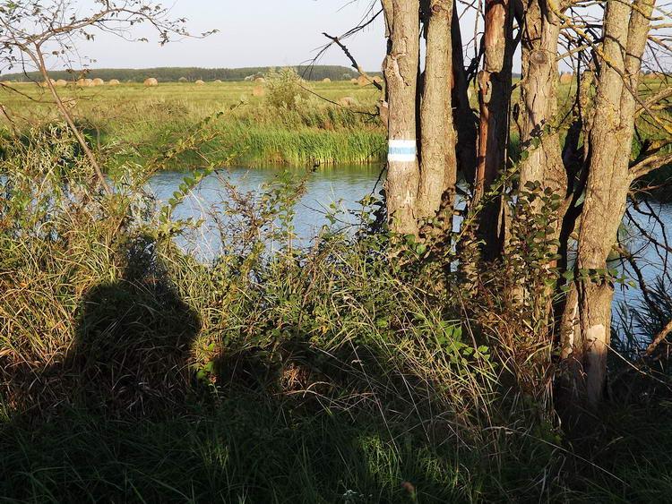 Kilátás a horgásztóra a partján futó keréknyomokról