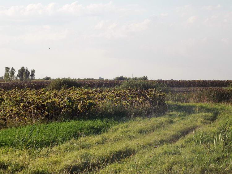 Túra a csatornaparton, itt már kaszált keréknyomokon. A távolban már feltűnt Bojt templomtornya.