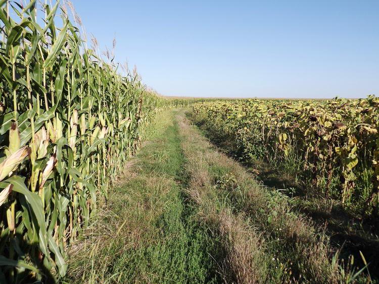 Végtelen kukorica- és napraforgótáblák között