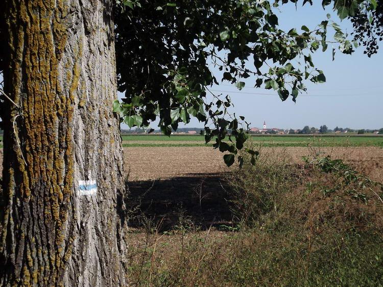 Kilátás Létavértesre az útszéli fák között