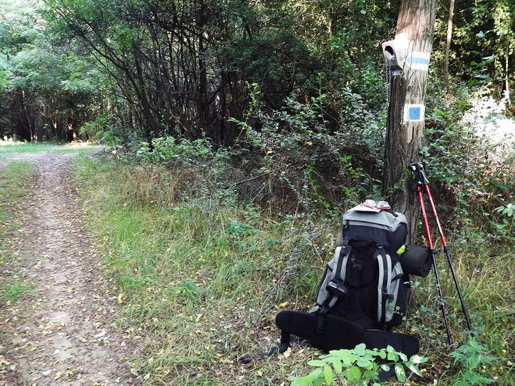 Az álmosdi pecsételőhely kinn van az erdőben