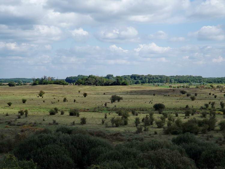 Kilátás a toronyból az erdős pusztákra