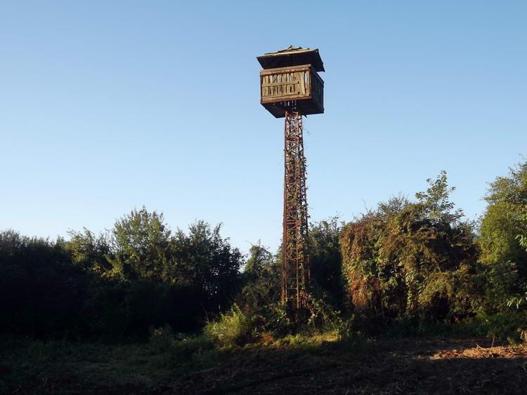 Különös, toronyszerű építmény az erdőszélen