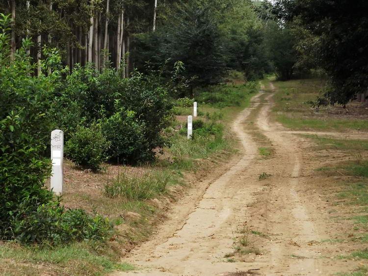 MTSZ útjelző oszlopok az erdei út mellett