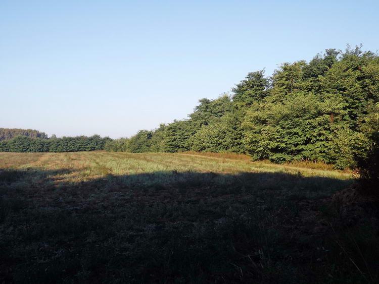 Gazos tarló az erdőszélen. Ezen keresztül értem el az országutat.