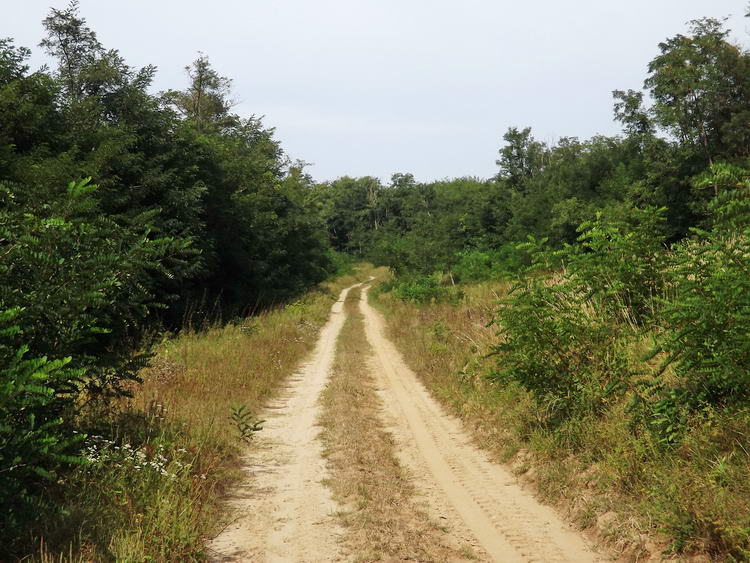 Homokos erdei úton Rohod után