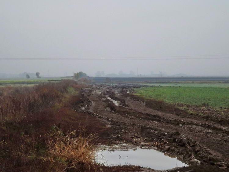 Mezőkön átvezető sáros úton Cigánd után