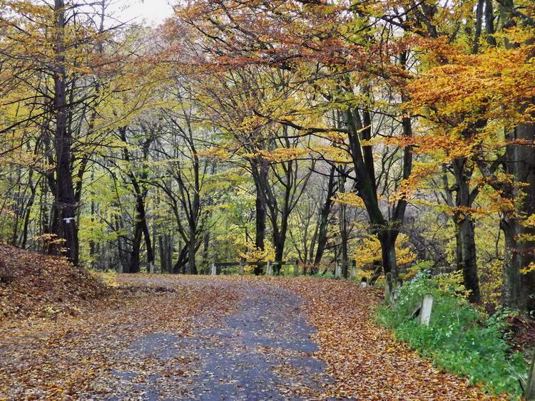 Az erdei aszfaltút az Országos Kéktúra régi útvonala