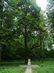 Erzsébet királyné emlékfája az erdészháznál 104 kB