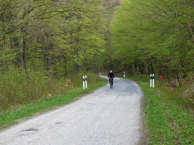 Erdőgazdasági aszfaltúton a Bükkös-patak völgyében