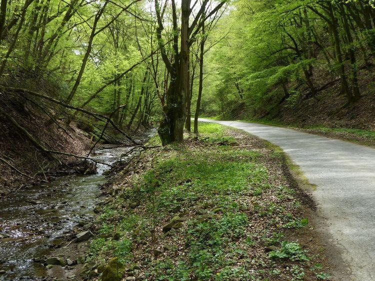 Visegrádi-hegység - Erdészeti úton a Malom-völgyben