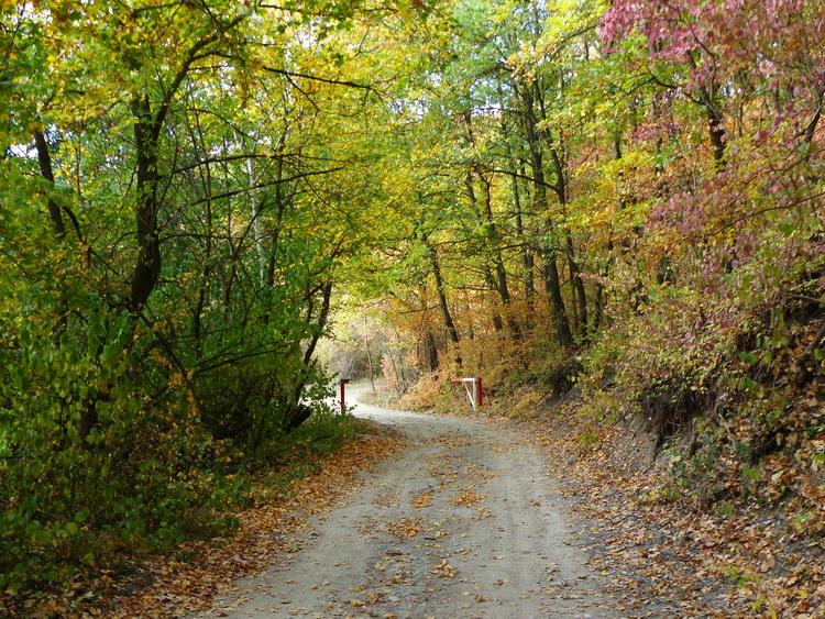 Egy masszív fémsorompó előtt léptem be a legszebb őszi színekben pompázó erdőbe
