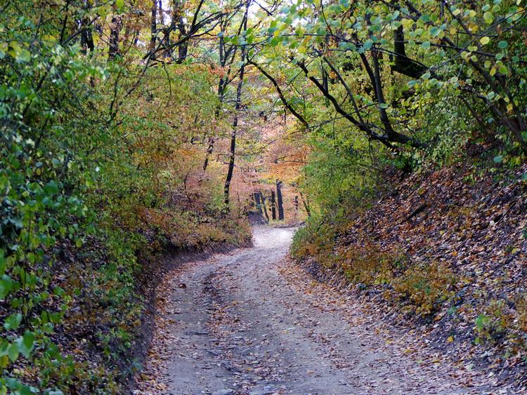 Mélyútként kanyargó keréknyomokon az őszi erdőben
