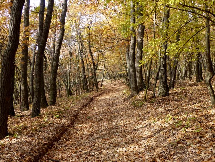 Ereszkedés az erdőben a Somlyó déli oldalában 1.