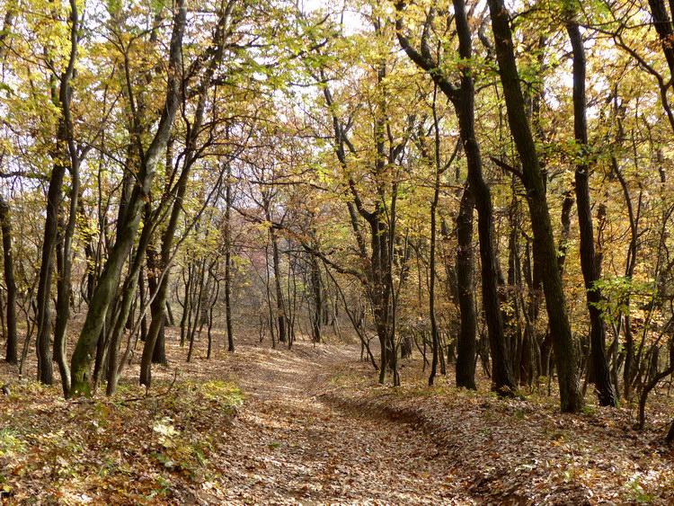 Ereszkedés az erdőben a Somlyó déli oldalában 2.
