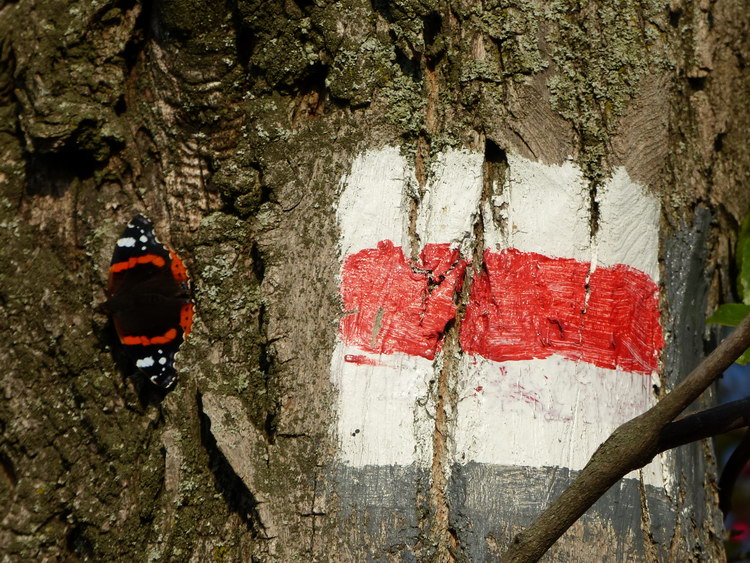 Napozó pillangó egy piros sáv jelzés mellett