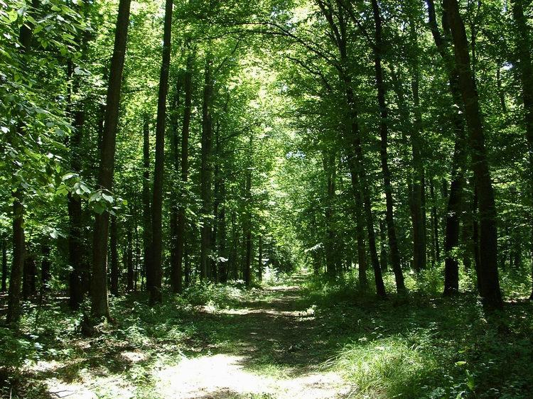 A Tilos-erdő egyik nyiladéka