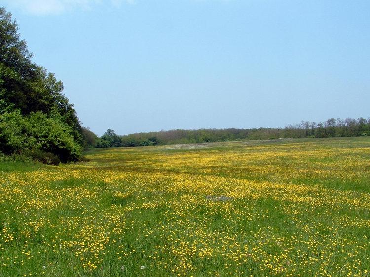 Flowery field before Sitke village