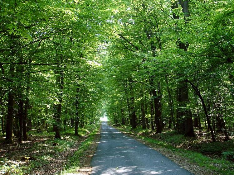 On the asphalt road of Farkas Forest
