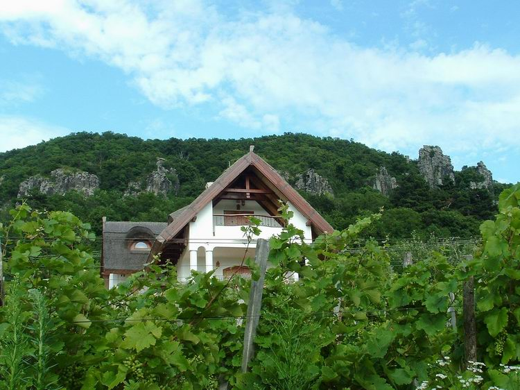A glimpse towards the basalt rocks of Badacsony from the vineyards