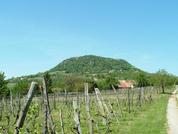 The Csobánc taken from the vineyards