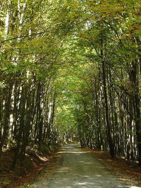 On a narrow asphalt road towards Bakonybél