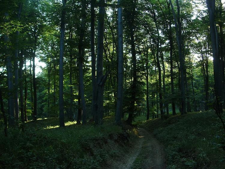 In the Ciklámen Valley