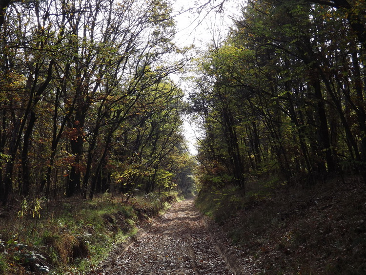 Sandy dirt road in the forest towards Piliscsaba village