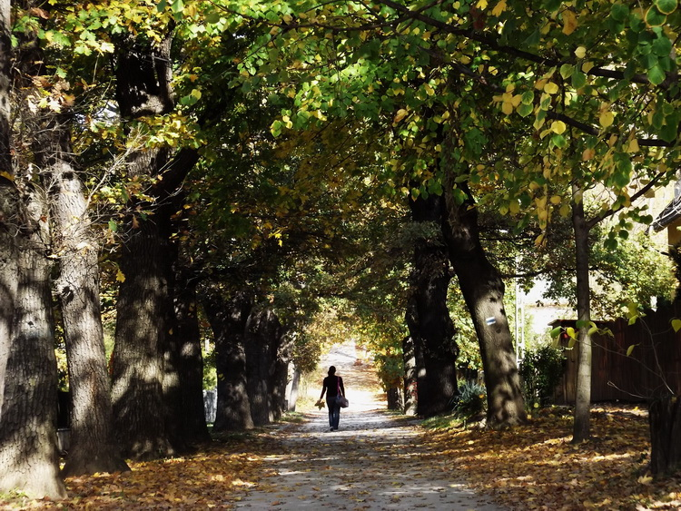 In the horse chestnut alley of Piliscsaba
