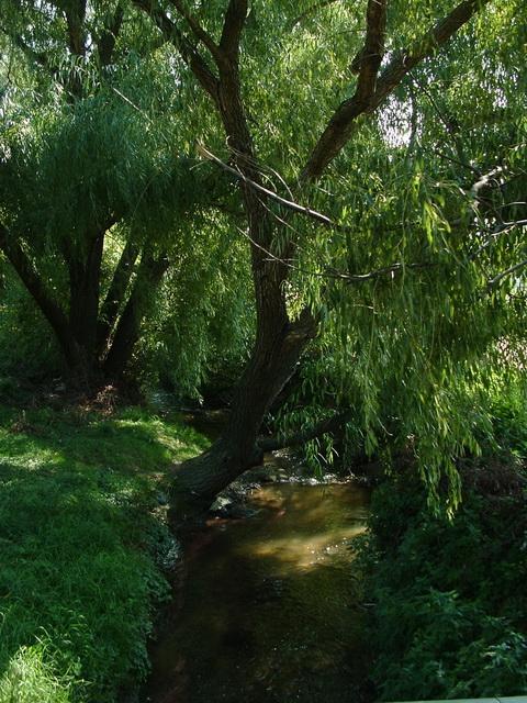 The Aranyhegyi-patak Creek