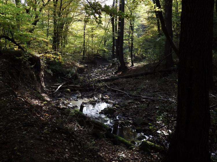 We walk beside the creek