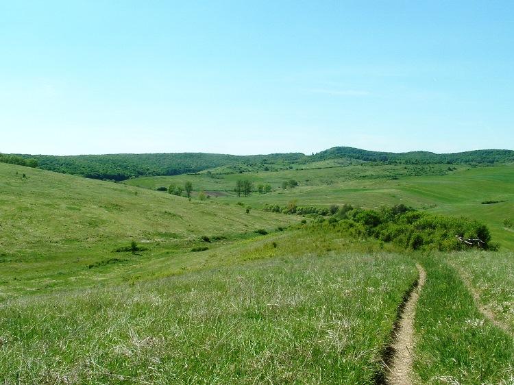 We walk on wheel tracks across the pasture