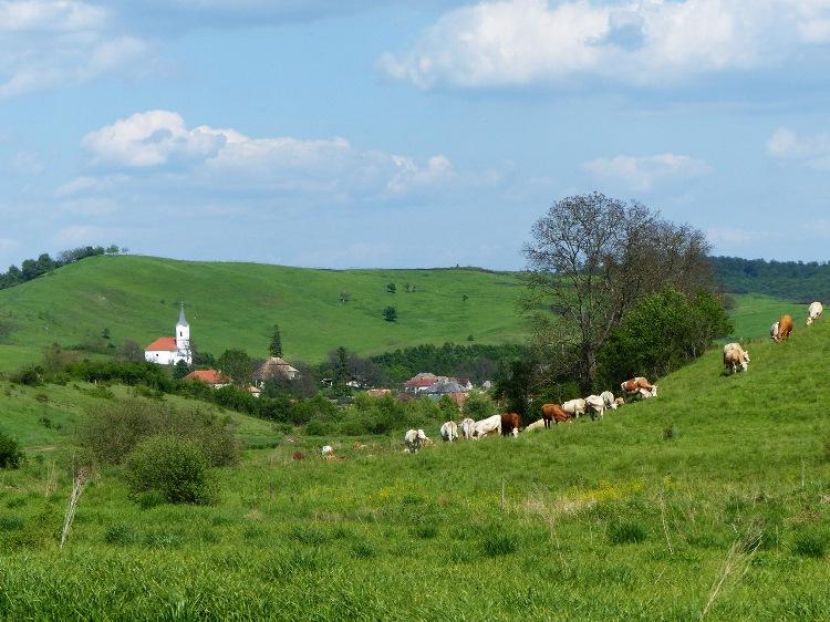 We hike in the Bors-völgy Valley towards Zádorfalva village