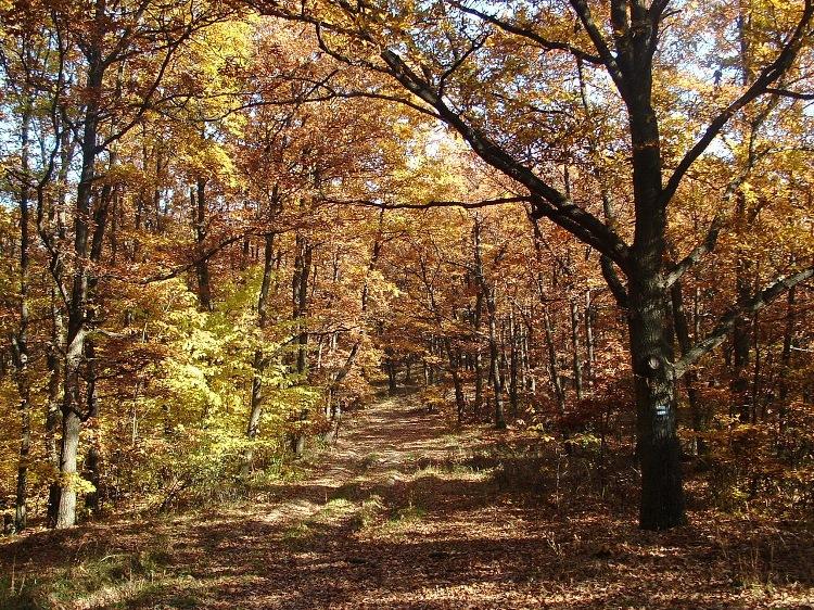 Késő őszi erdő Zádorfalva után